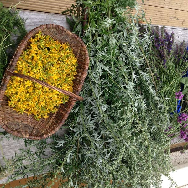 Herbs for drying