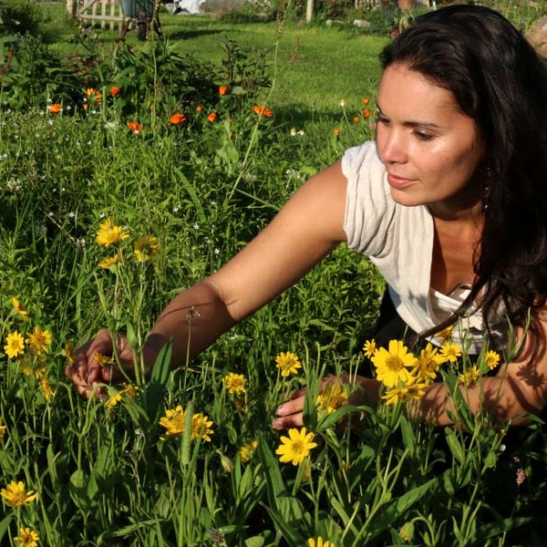 Marina Picking Arnica