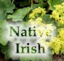 Native Irish
